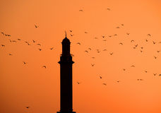 Surrounded by seagulls. This image was taken in Deira, Dubai during the sunset time. The minaret was surrounded by the seagulls Royalty Free Stock Photos