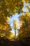 Surrounded tree. Autumn colors in a forest in late october Stock Image