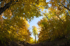 Surrounded tree. Autumn colors in a forest in late october using a fisheye lens Stock Photography