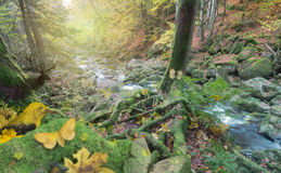 Surrounding Animals at Autumn Forest River. Autumn forest scene by a river, with a group of animals, in yellow, glowing light at the edge, a bird, a beetle, a stock photo