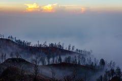 Surroundings of Ijen volcano. Trees through fog and sulfur smoke. Banyuwangi Regency of East Java, Indonesia. Surroundings of Ijen volcano in the early morning stock images