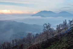 Surroundings of Ijen volcano. Trees through fog and sulfur smoke. Banyuwangi Regency of East Java, Indonesia. Surroundings of Ijen volcano in the early morning royalty free stock images