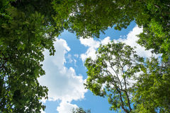 Surroundträd på himmelbakgrund Arkivfoton