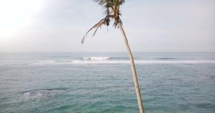 Surrresning från jordningen ovanför det fantastiska soliga havet som skummar vågpanorama för att avslöja en enkel palmträd med ko arkivfilmer