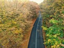Surrsikt av en väg och en skog royaltyfri bild