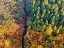 Surrsikt av en väg och en skog arkivbild