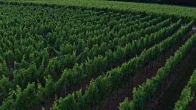 Surrvideo från tyska vingårdar arkivfilmer