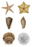Surtido 2 del shell Foto de archivo libre de regalías