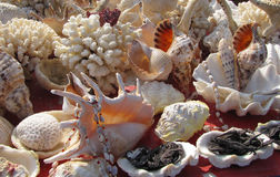 Surtido de cáscaras y de coral Foto de archivo libre de regalías