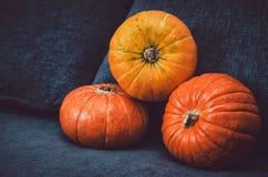 Surtido de calabazas anaranjadas en fondo oscuro Símbolo de la caída, concepto del día de la acción de gracias Todavía vida, esti Fotografía de archivo libre de regalías
