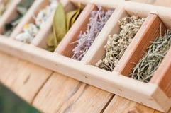 Surtido de hierbas medicinales secas Imágenes de archivo libres de regalías