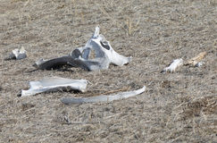 Surtido de huesos blancos que mienten en el Sun Foto de archivo libre de regalías