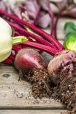 Surtido de verduras recién cosechadas Fotos de archivo