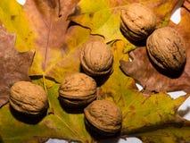 Surtido oleaginoso Fotografía de archivo libre de regalías