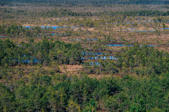 Suru Suursoo bog, aerial view by early spring Stock Photography