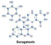 Surugatoxin ganglionic blocker. Surugatoxin is a type of venom found in the mid-gut digestive gland of a carnivorous gastropod. It functions as a ganglionic Stock Photo