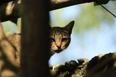 Surveillance of a cat. A cat lurking prey from the top of the wall fence Stock Photography