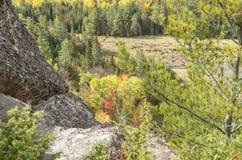 Surveillance 5 de nid d'Eagles photos libres de droits
