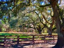 Surveillance de support d'arbres le long de barrière Photo stock