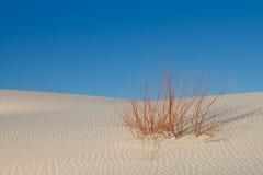 Survie - seule centrale sur la dune de sable blanche Images stock