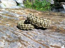 Survival Bracelets Royalty Free Stock Image