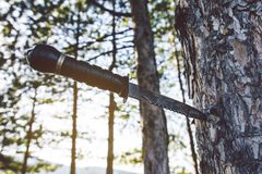 Survival Knife Stuck Into Pine Tree Stock Images