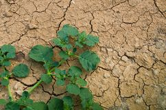 The Survival. The last  plants survival in the dryness land Stock Photos