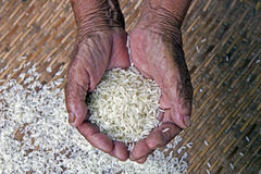 The survival with rice , Stock Photo