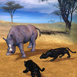 Survival in the Serengeti. 3d rendering a combat scene between panthers and the rhinoceros in the Serengeti as illustration Royalty Free Stock Photography