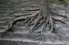 Survival of trees in the city. Environmental problem. Stock Photo