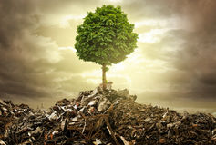 Survive. A single tree survives between a lot of trash Royalty Free Stock Image