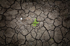 Survived plant on dried cracked earth Stock Photos