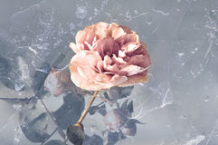 Rose in ice Stock Image