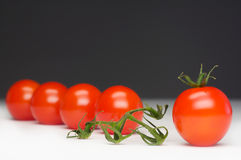 Survived tomato. A row of five tomatos with caulis Royalty Free Stock Image