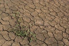 Survivez à la plante verte en terre criquée image libre de droits