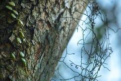 Survivez à la sécheresse photo libre de droits