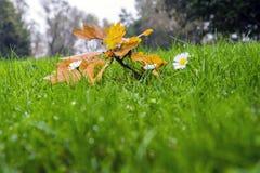 Surviving Autumn Stock Images