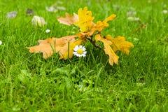 Surviving Autumn Royalty Free Stock Photo