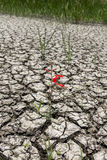 Surviving red flower in cracked earth Royalty Free Stock Photos