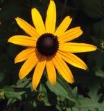 Susan Eyed negro foto de archivo libre de regalías