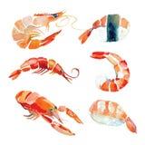 Sushi dibujado mano de la acuarela, mariscos Imagenes de archivo