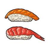 Sushi with fish and shrimp. Vintage black vector engraving. Nigiri Sushi with fish and shrimp. Isolated on white background. Vintage color vector engraving stock illustration