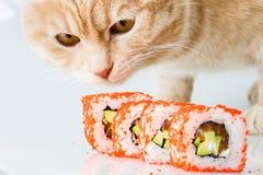 Sushi japanese  roll  japan meal fresh Stock Photos
