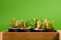 Sushi, vegetariano fotografie stock libere da diritti