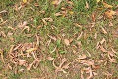 Susi żółci jesień liście ciemna trawa zieleni Zdjęcia Royalty Free