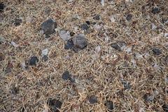 Susi bambusów liście, skała i Zdjęcie Royalty Free