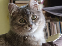 Susi!. Susi is a beautiful cat royalty free stock photos