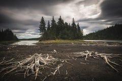 Susi brzeg na niskim poziomie wodym Drewniani korzenie na czarnej ziemi zdjęcia stock