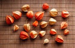 Susi czerwieni, koloru żółtego i pomarańcze kwiaty, fotografia stock