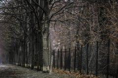 Susi drzewa i śnieg na trawie obok odprasowywają ogrodzenie w zimie zdjęcia royalty free
